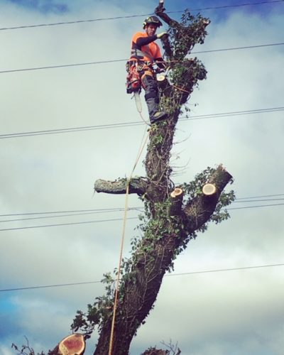 "Tree Surgery Plymouth, look no further if thinking ""where can i hire"""