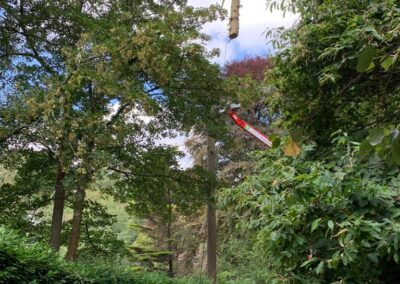 small and large woodland tree surgery projects for pests and disease control