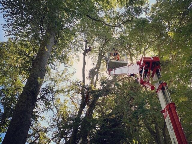 Woodland Management tree surgery pest and disease control