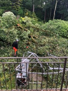 Fallen Tree Emergency Call Out required