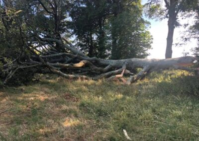 Fallen tree Emergency Tree surgeon required