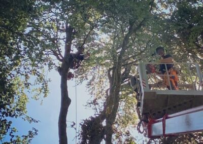Woodland tree services for large commercial projects