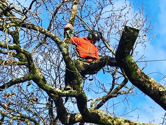 tree removal plymouth