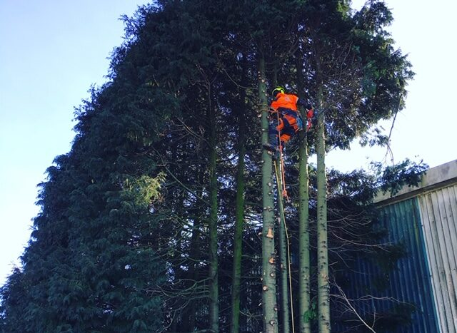 Tree surgery services near me in Plymouth Devon