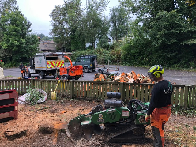Tree surgeons Plymouth Services