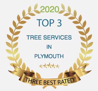 Best Tree surgeon in Playmotuh award's for top tree surgery