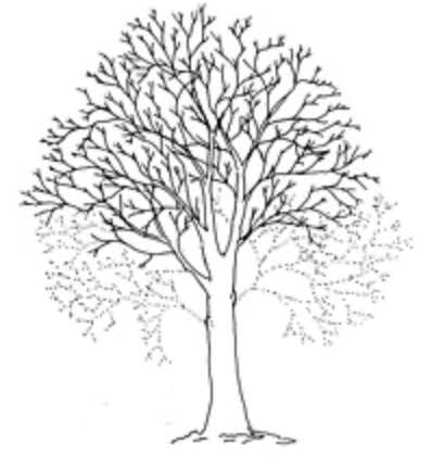 Tree Surgery Crown lift image