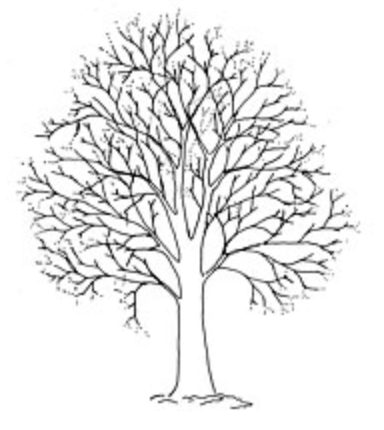 Tree Surgery Crown Thinning photo