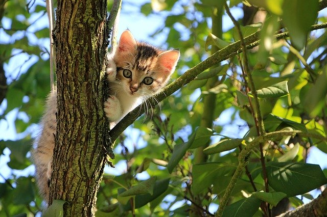 cat stuck in tree 24 hour call out 7 days a week