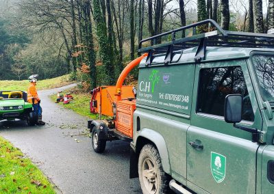 commercial tree surgeons plymouth