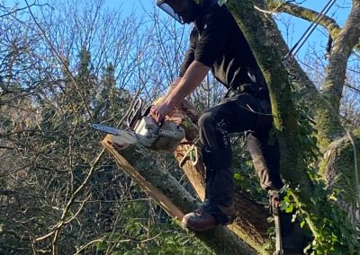 tree removal torpoint