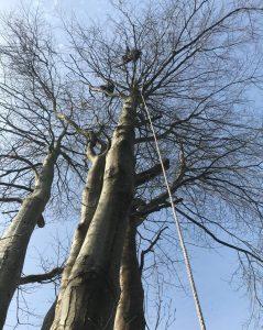 tree removal saltash