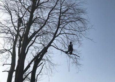 tree surgeons yealmpton