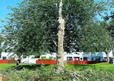 tree removal compton