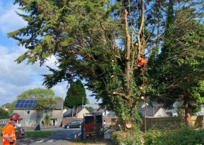 tree removal whitleigh