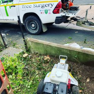 stump removal whitleigh